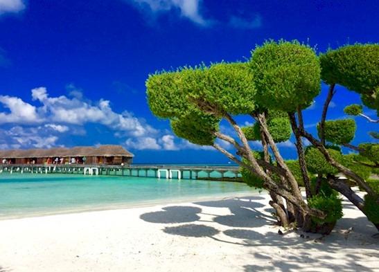 Best of the Maldives Topiary  LUX Maldives  Maldives