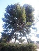 Avignon en famille - Jardin des Doms 4