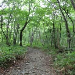 "Trampel""pfad"" durch den Wald"