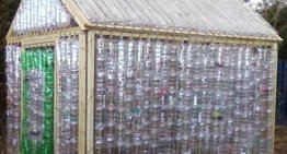 Create Your Own DIY Plastic Bottle Greenhouse