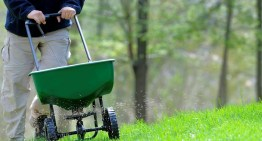 Expert Lawn Care Tips For The Perfect Lawn