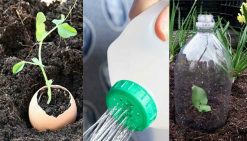 10 Simple and Cheap Gardening Tricks
