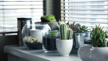 How to grow a cactus: Desert Glamour on Your Windowsill