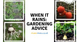 When it rains : Gardening Advice