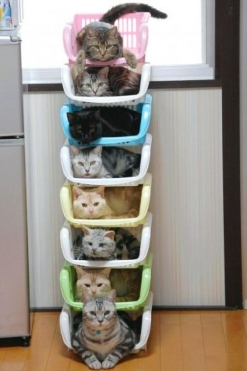 2273555-best-way-to-organize-your-cats-500-dbd547efea-1471877583