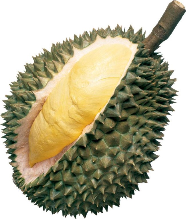 Type of Durian - D24
