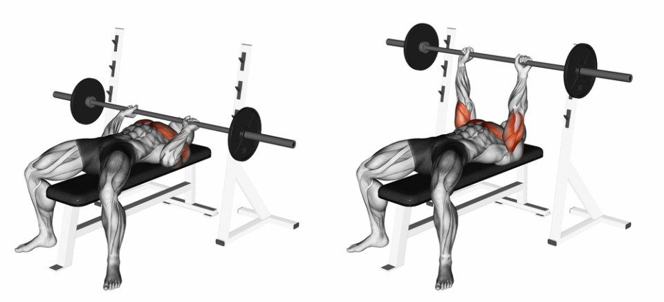 Barbell bench press for upper body strength