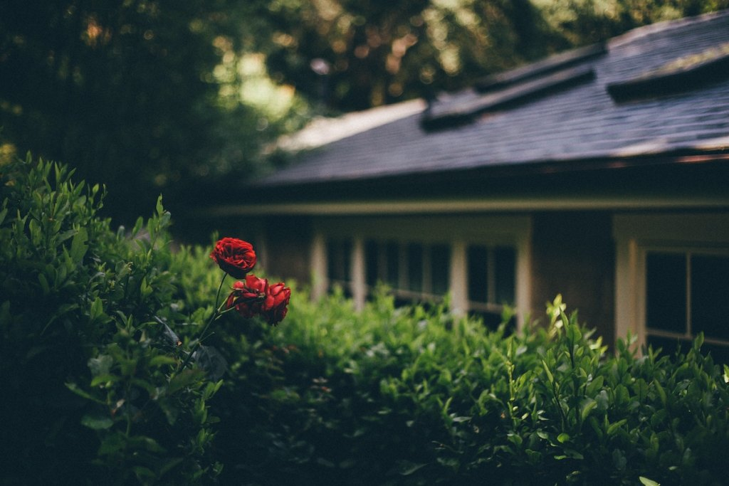 Flipping property with roses