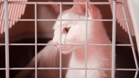 White cat in kennel