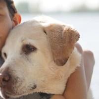 Convivir con mascotas, beneficioso para la personalidad y la salud