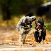 El celo en perros : Edad, síntomas y consejos