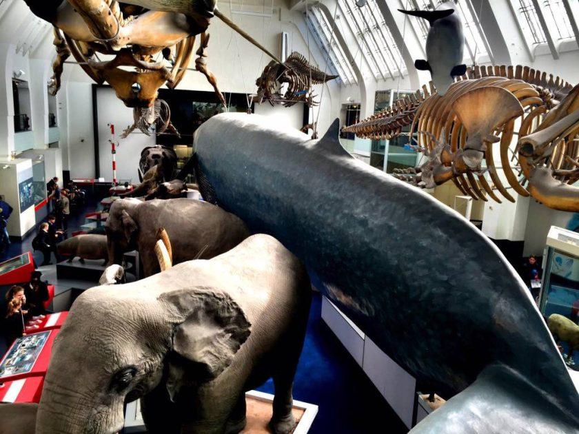 Elefantit ja valaat sulassa sovussa.