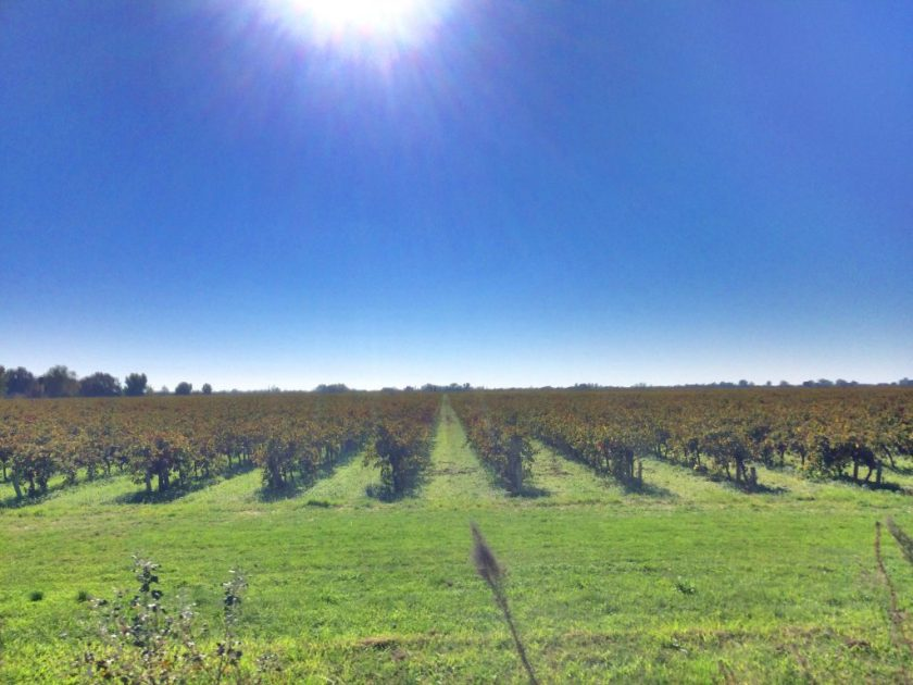 Vaikka sesonkiaika olikin ohi, olisi viinitiloihin päässyt halutessaan tutustumaan.