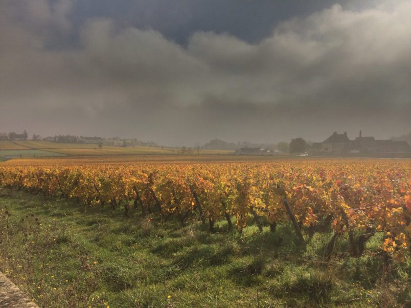 Burgundin viinipellot.