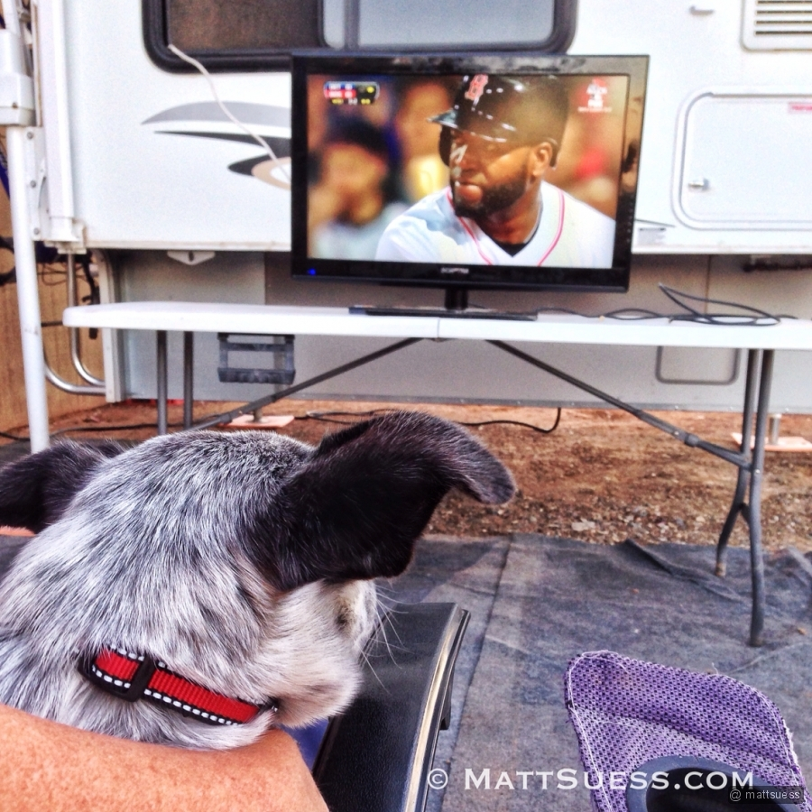 Scrappy, meet Big Papi. Seems like my pup has taken a liking to the Red Sox in Phoenix.
