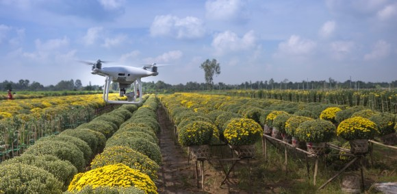 drone dans les champs