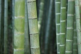 bamboo-919052__180