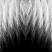 feather-1033141__180