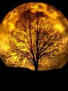 moon-165487__180