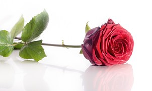 rose-1340803__180