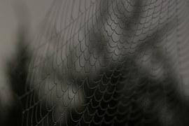spider-web-1030898__180