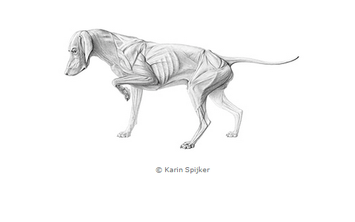 Black and White Medical Illustration