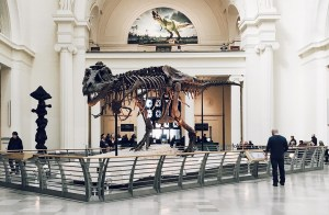 image d'un T-Rex au musée