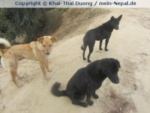 2014-08-08_Hundeproblem in Nepal