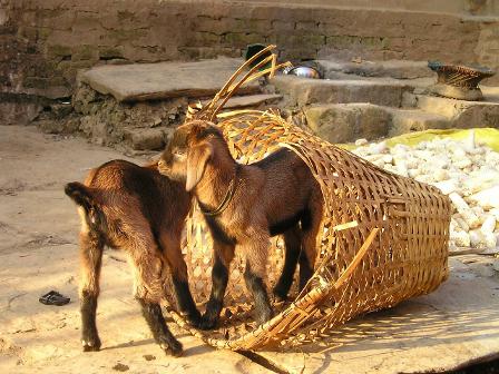 Nepal XI – Tag 23 – Angstschreie