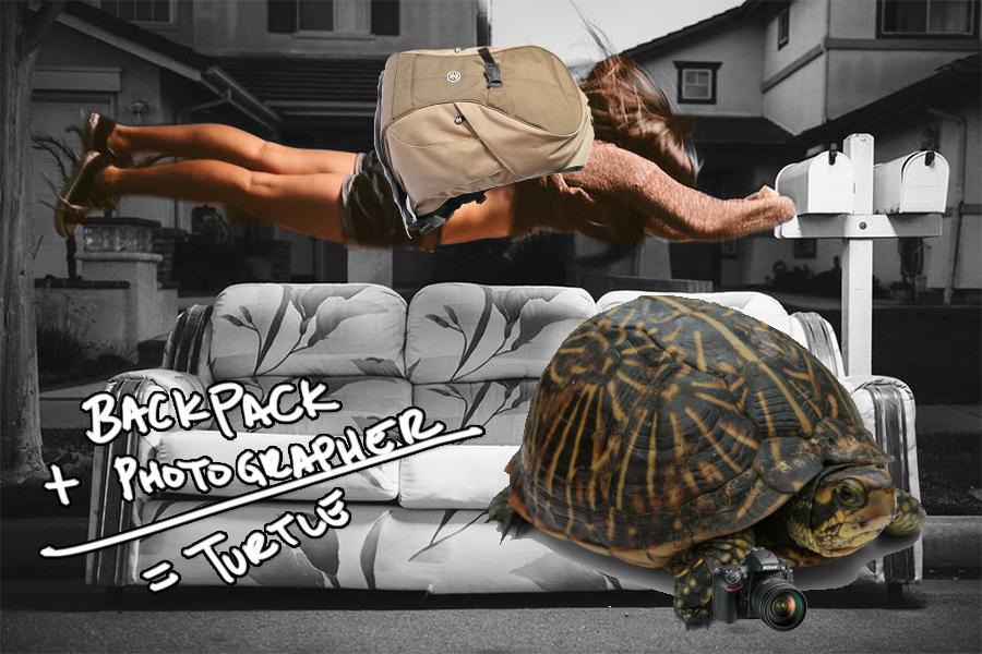 mellylee-turtle