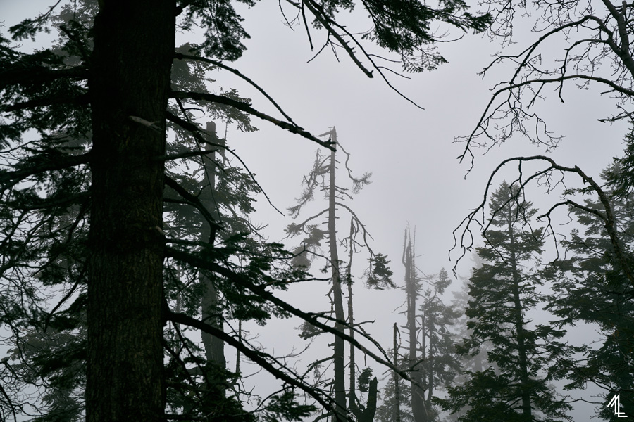 MLEE-CousinCampingSequoiaNP-004