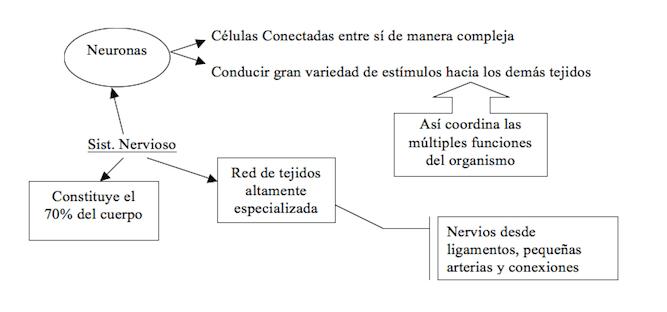 FE-MT-Esquemas1