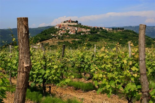 istrian-vineyards