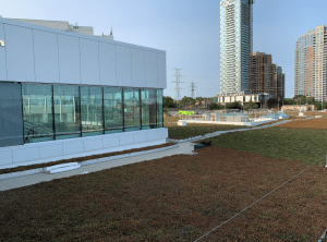 Image shows a green grass roof.