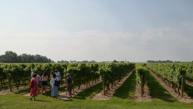 winery with people standing in the field