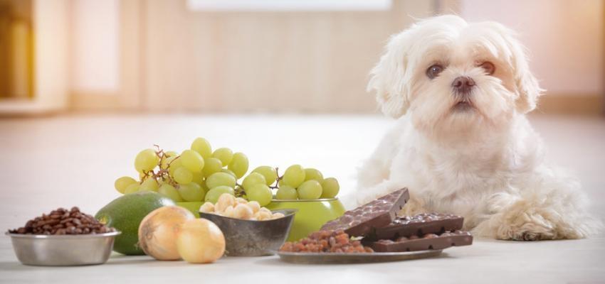 Alimentos que podem, sim, prejudicar seu pet