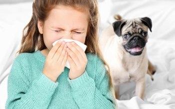 O que fazer quando meu pet tem alguma alergia?