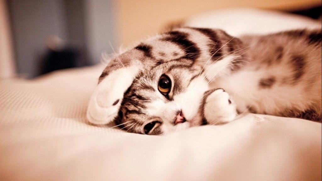 Gatos que miam em excesso