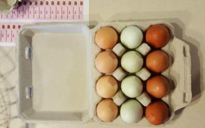 Backyard Eggs Price Trends Across the US
