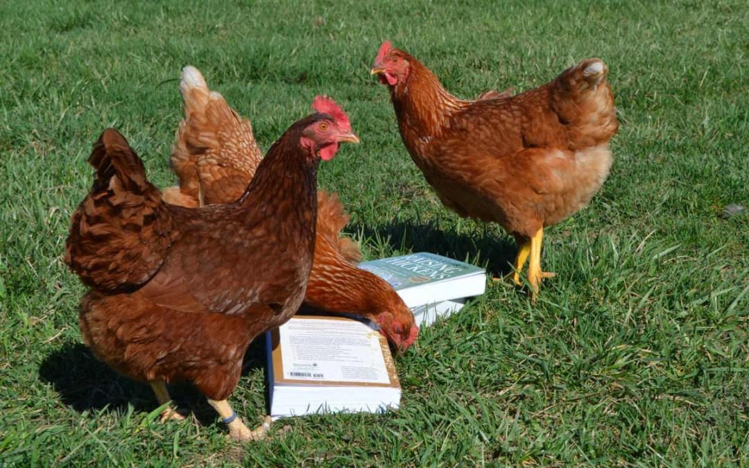 Top 10 Best Chicken Reads