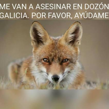 La matanza de zorros en Dozón pontevedra