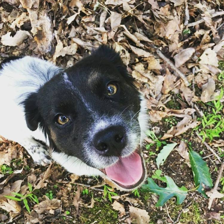 picture of animal rescue dog in leaves smiling at camera