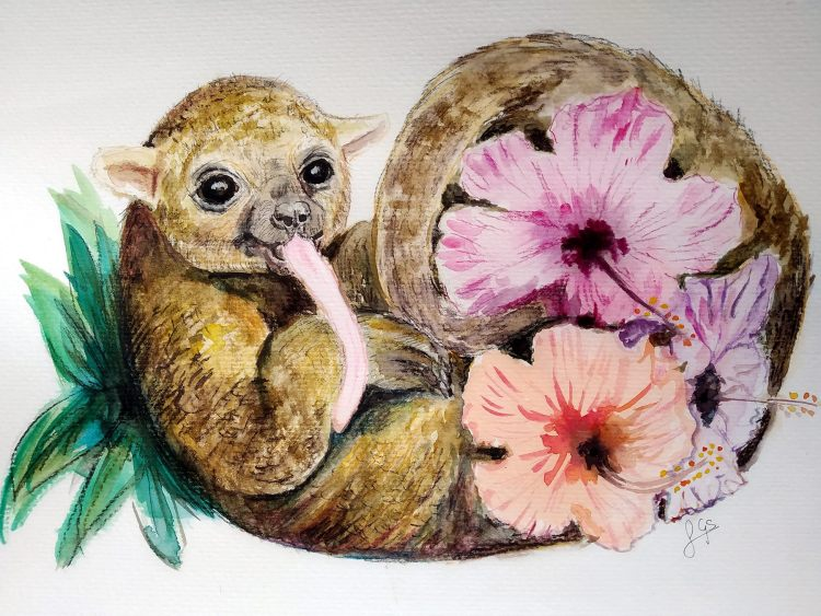 painting of a kinkajou