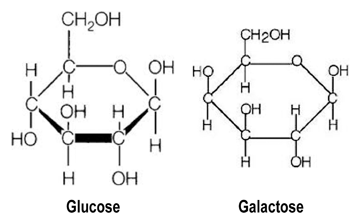 Gatorade, Galactose and Hydration: Research based