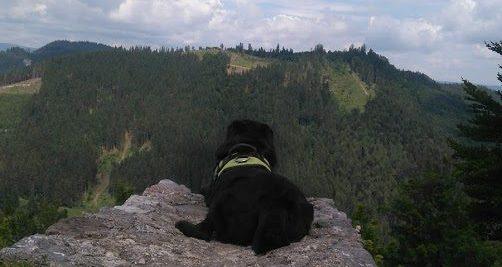 pies w górach - zabieramy psa na szlak