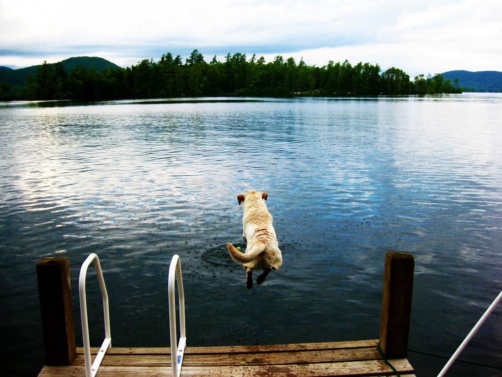 Dog Running off Dock by Cali4beach