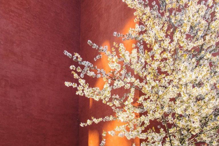 Feng shui tree