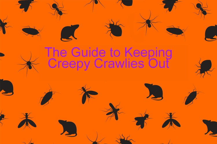 pests vermin creepy crawlies vector black and orange