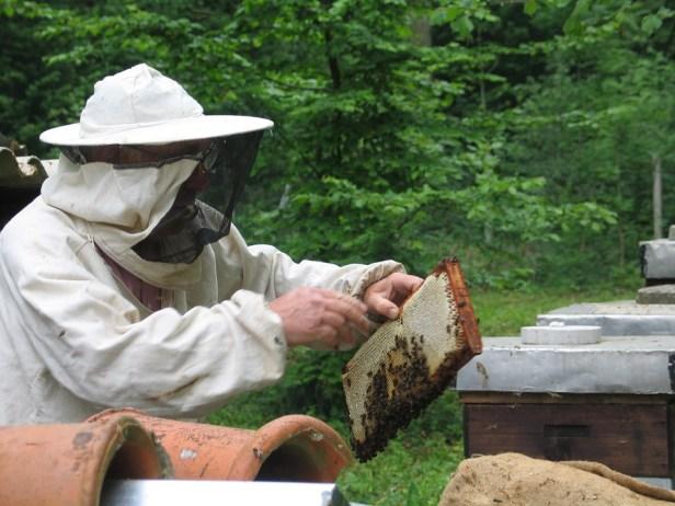 pszczelarz rozwojowy profesjonalista, miodarka z sitem, miodarka z odstajnikiem, miodarka na bazie stołu, miodarka minima, miodarka optima