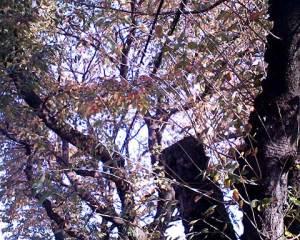 トイデジで撮った木の写真。紅葉してます